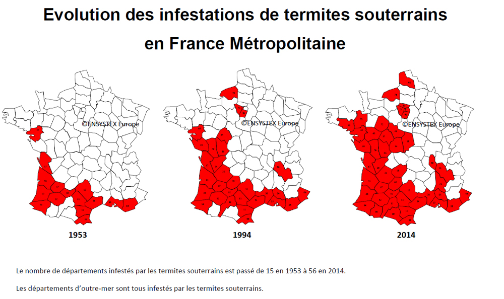 Evolution des infestations de termites en France